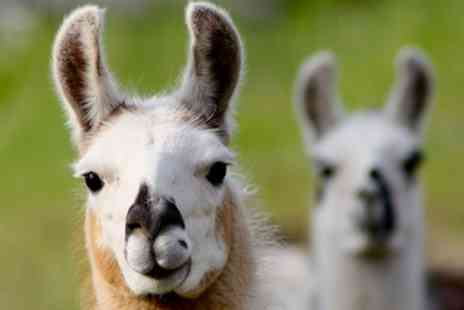 Alpaca Annie - Alpaca Trek For Two or Four - Save 44%