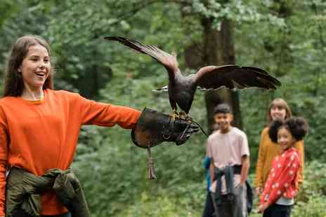 Hawksflight Falconry - 2 hour birds of prey experience - Save 73%