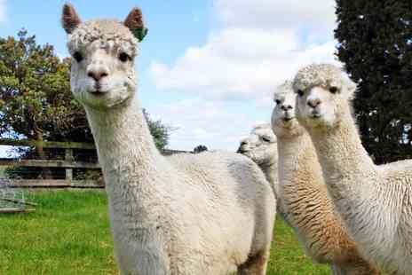 Birds of Prey Centre - Alpaca walk for Two - Save 61%