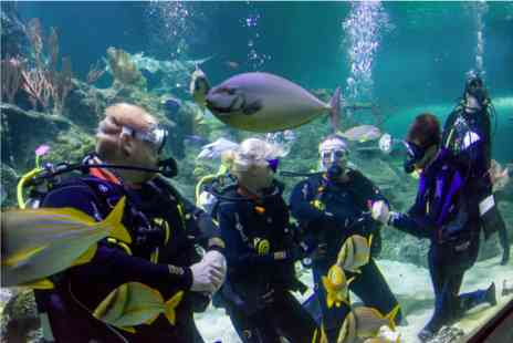 Skegness Aquarium - Weekday Dive with Sharks - Save 0%