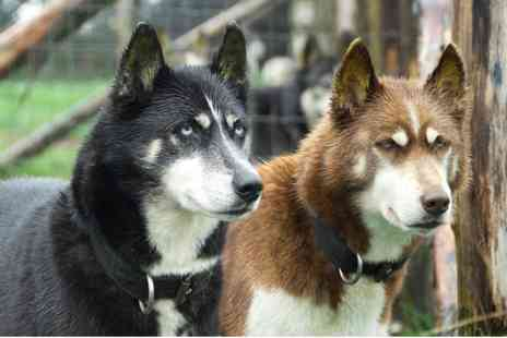 Eagle Heights Wildlife Foundation - Hike with Huskies and Entry for Two - Save 0%