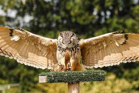 Yarak Birds of Prey - Birds of prey flying and handling experience - Save 35%