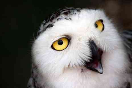The North Somerset Bird of Prey Centre - Two Hour Owl Experience for One or Two - Save 53%