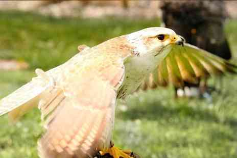 West Sussex Falconry - Three hour falconry experience for one person - Save 68%