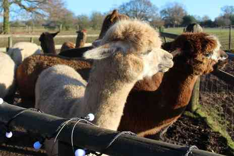 Lucky Tails Alpacas - Family alpaca experience or meerkat experience and alpaca walk for two - Save 52%