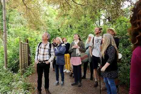 To The Trees - Walk in nature, a Tour of Glastonbury guided by the Trees - Save 0%