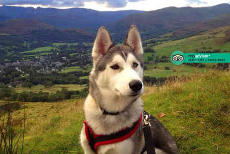 Horse and Husky - Two hour bronze level husky sledding experience for two people - Save 69%