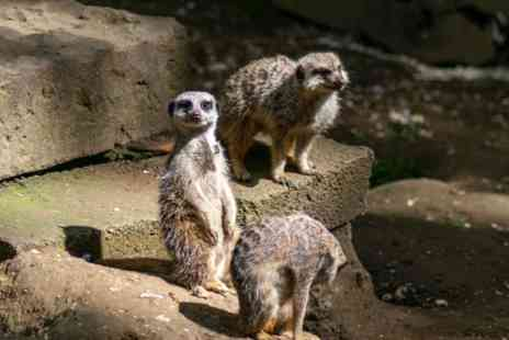 Bridlington Animal Park - Meet the Meerkats for Two - Save 0%