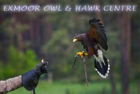 Exmoor Owl and Hawk Centre - Bird of Prey Experience and Guided Tour - Save 60%