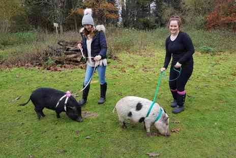 Huckleberry Woods Micro Animal Adventures - Micro pig walk for one person, Miniature donkey walk for two people also get entry for two adults and two children to the farm - Save 0%