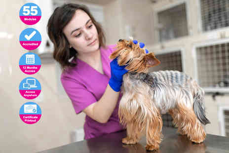 Holly and Hugo - Accredited vet in the making course - Save 92%