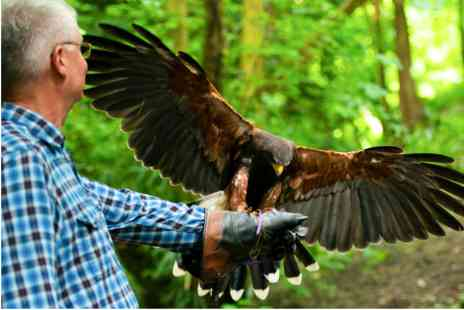 Hedingham Castle - Medieval Falconry Day with Tour and Lunch - Save 0%