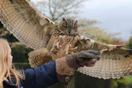 Joes Bows - 150 Minute Falconry Experience for Up to Four - Save 58%