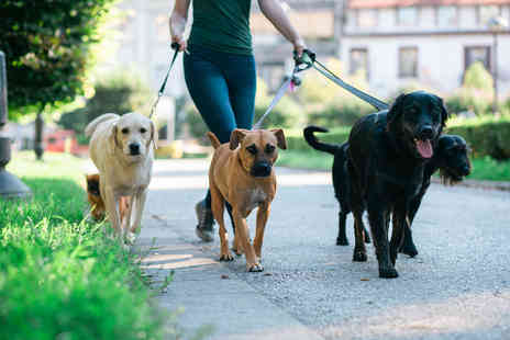 Holly and Hugo - Accredited loose leash dog walking course - Save 86%