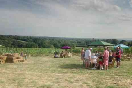 Beacon Down Vineyard - Vineyard Tour with Wine Tasting for Two or Four - Save 40%