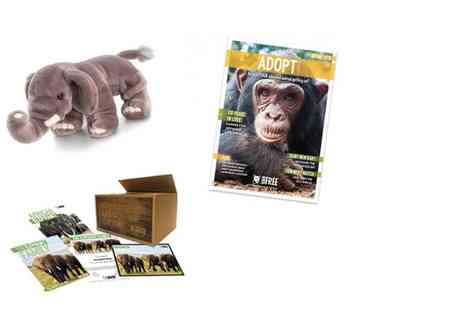 Born Free Foundation - One year elephant family adoption pack and cuddly toy - Save 47%
