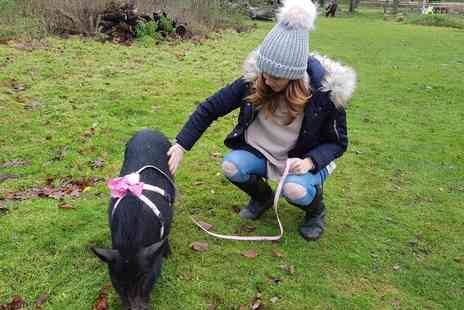 Huckleberry Woods Micro Animal Adventures - Micro pig walk for one person - Save 34%
