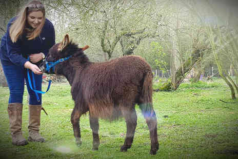 Huckleberry Woods Micro Animal Adventures - Miniature donkey walk for two people with soft drinks, cakes, entry to the farm and animal feed - Save 33%