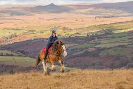 Malcolm Snelgrove Photography - Dartmoor Horse Photography Workshop - Save 0%