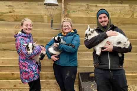 Virgin Experience Days - Pygmy Goat Play for Two - Save 0%