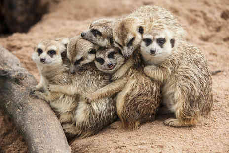 Willow Tree Family Farm - One hour meet the meerkats experience and farm entry for two people - Save 49%
