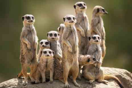 Willow Tree Family Farm - 30 Minute Meerkat Experience, Park Entry, Cream Tea for Two or Four - Save 38%