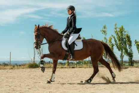 Shedfield Riding School - 30 Minute Private Horse Riding Lessons - Save 39%
