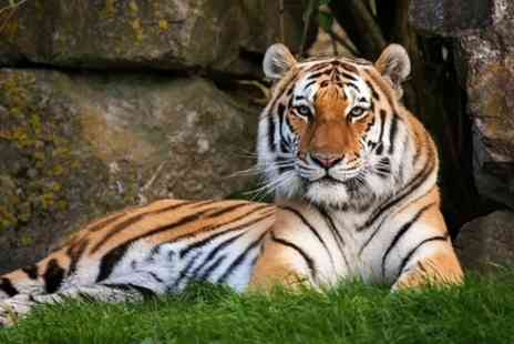 Marwell Zoo - 140 acre park is home to an incredible range of exotic and endangered species, in beautiful, landscaped surroundings - Save 0%