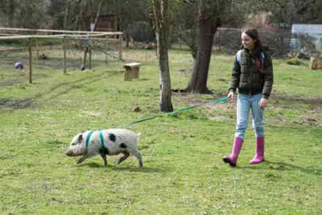Huckleberry Woods - Miniature Farm Animal Experience with Sweet Treats and Tea for Two - Save 0%