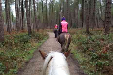 Lily Lodge Equestrian Centre - One hour horse trekking experience for one - Save 63%