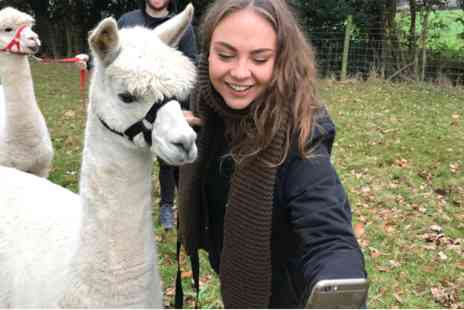 Middle England Farm Alpacas - Walking Experience for Two - Save 0%
