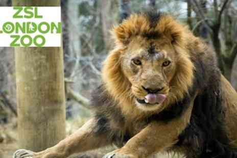 ZSL London Zoo - Tickets to see ZSL London Zoo - Save 0%