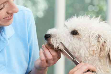 Virgin Experience Days - Introduction to Dog Grooming 15 Part Online Course - Save 0%