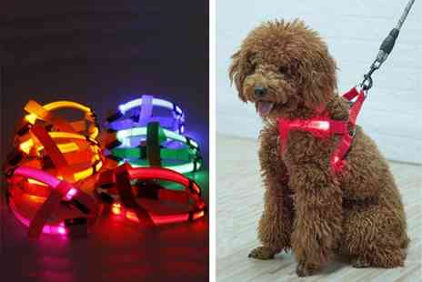YelloGoods - Led dog harness - Save 70%