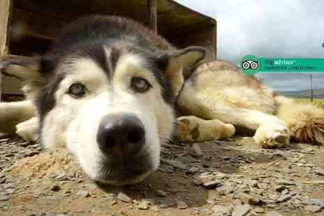 Horse and Husky - Two nights Lake District break for two with husky sledding, hiking or dog training - Save 33%