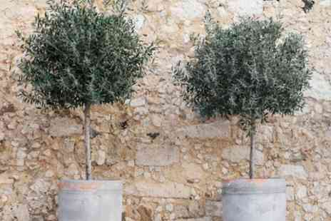 Groupon Goods Global GmbH - Olive Trees - Save 0%