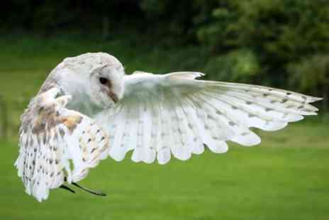 West Sussex Falconry - Two Hour Owl Experience for One or Two - Save 35%