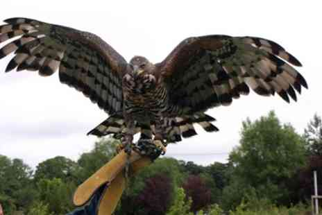 CJ Birds of Prey - Two Hour Birds of Prey or Owl Encounter Experience - Save 53%