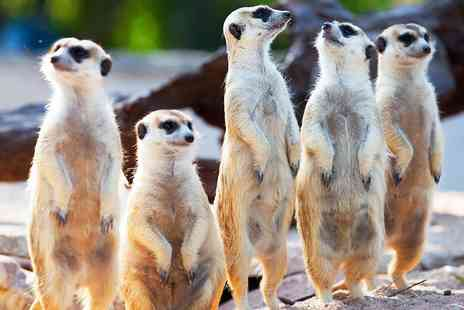 The Animal Experience - Meet the meerkats experience for Two - Save 51%