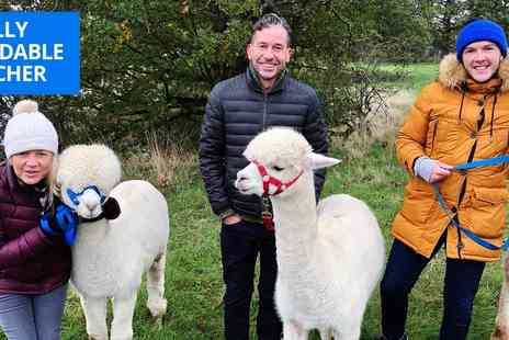 Middle England Alpaca Farm - Alpaca walking tour for Two - Save 48%