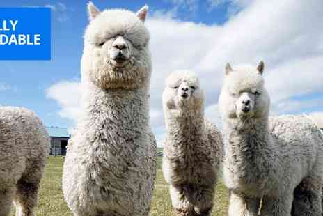 Lucky Tails Alpaca Farm - Warwickshire alpaca walk and farm entry for 2 - Save 26%