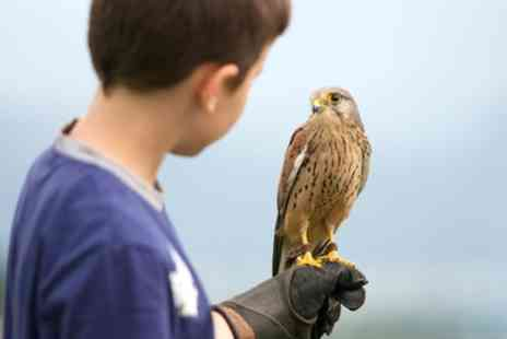 Hawksflight Falconry - Three Hour Birds of Prey Experience - Save 68%