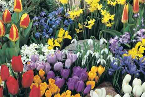 Groupon Goods Global GmbH - Spring Flowering Bulb Bonanza Collection Up To 200 Bulbs - Save 0%