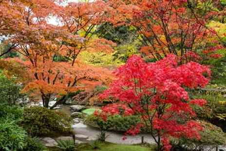 Groupon Goods Global GmbH - Set of Three Large Japanese Maples - Save 0%
