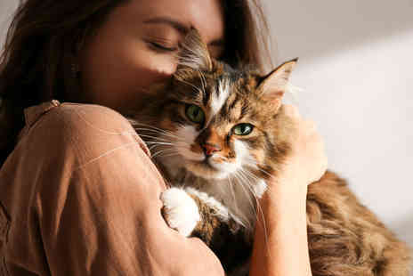 International Open Academy - Essential cat and kitten care online course - Save 0%