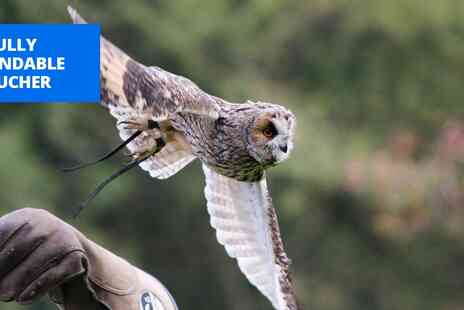 Hawksflight Falconry - 30 min birds of prey experience near Burton upon Trent - Save 0%
