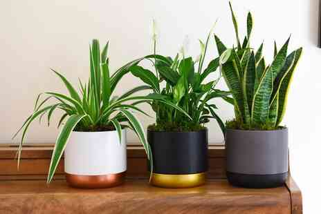 Thompson & Morgan - Purifying houseplant collection - Save 0%