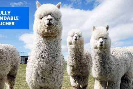 Lucky Tails Alpaca Farm - Warwickshire alpaca walk & farm entry for 2 - Save 26%