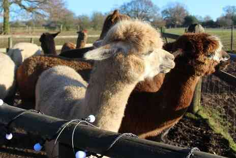 Lucky Tails Alpacas - Alpaca experience for one person - Save 0%