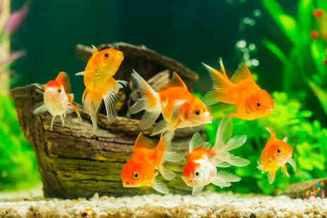 Contempo Learning - Online Aquarium Set Up & Maintenance course - Save 0%